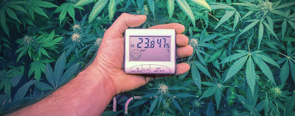 Les Températures Ultimes Pour La Culture Du Cannabis