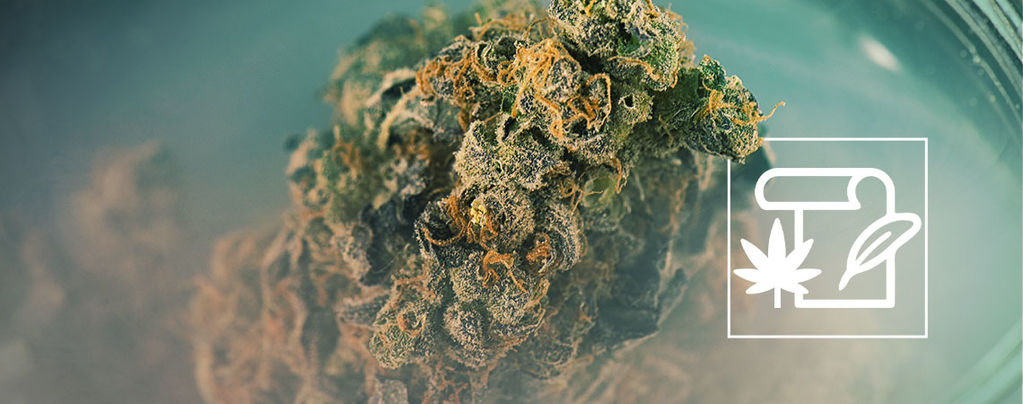 Skunk marijuana