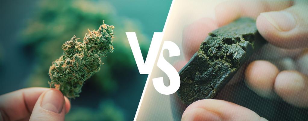La Différence Entre Cannabis Et Hasch