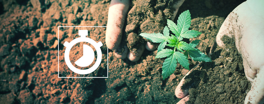 Temps Cultiver Cannabis