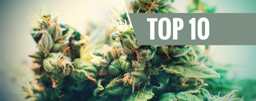 Top 10 Graines Cannabis Autofloraison