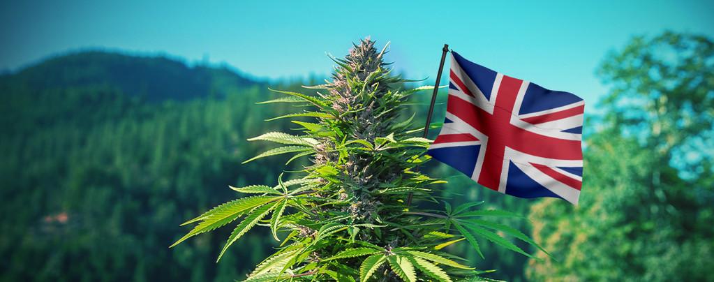 Meilleures graines de cannabis UK