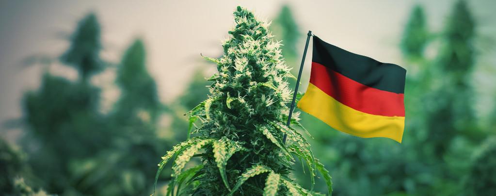 Meilleures Variétés De Cannabis D'Extérieur À Cultiver En Allemagne