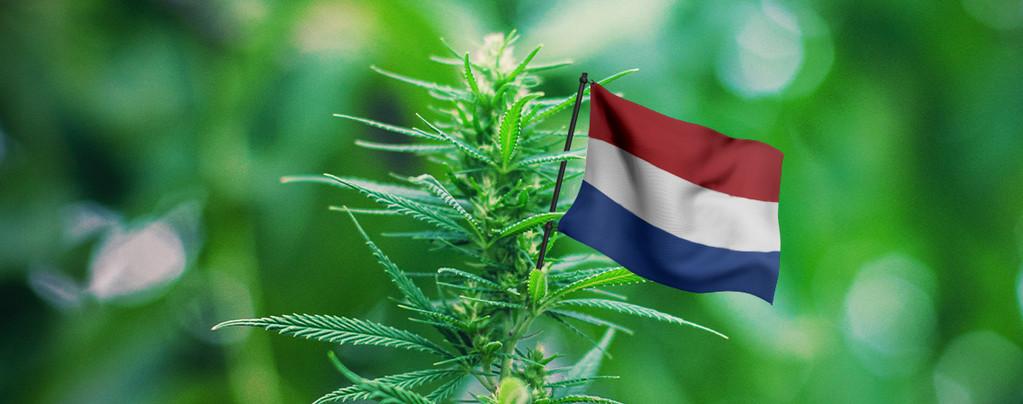 Meilleures Variétés Pays-Bas
