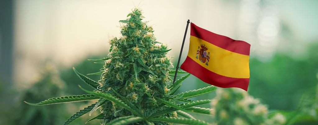 Meilleures Variétés De Cannabis Espagne