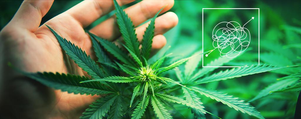 Argent Cannabis