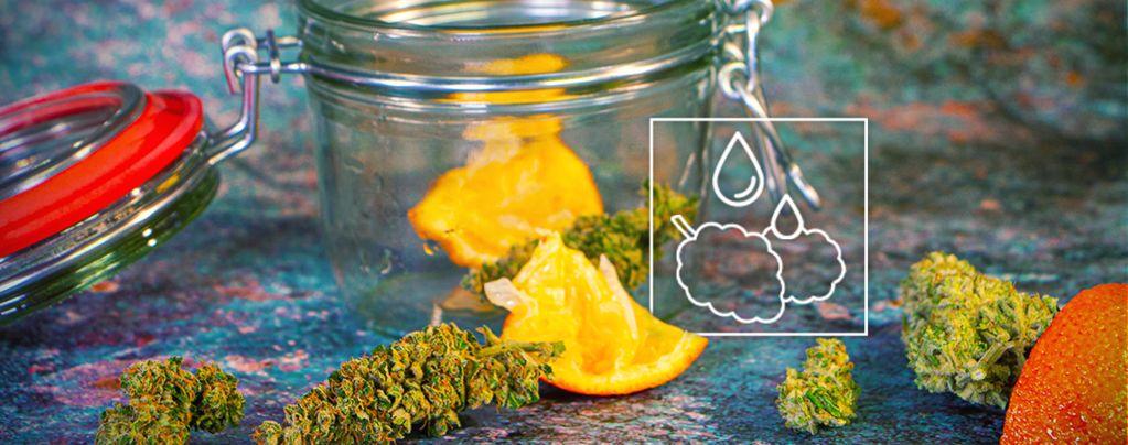 Comment Réhydrater Vos Têtes de Cannabis Desséchées