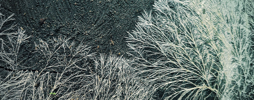 Qu'est-Ce Que Le Mycélium ?