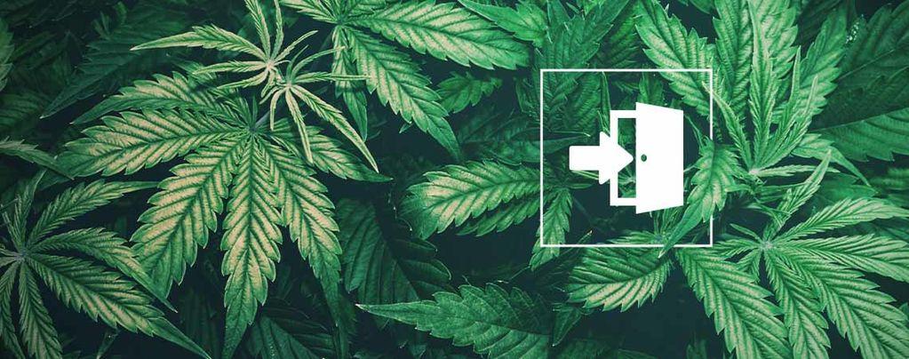 Les Meilleures Graines Comment Cultiver Du Cannabis En Intérieur ?Une Culture En Intérieur