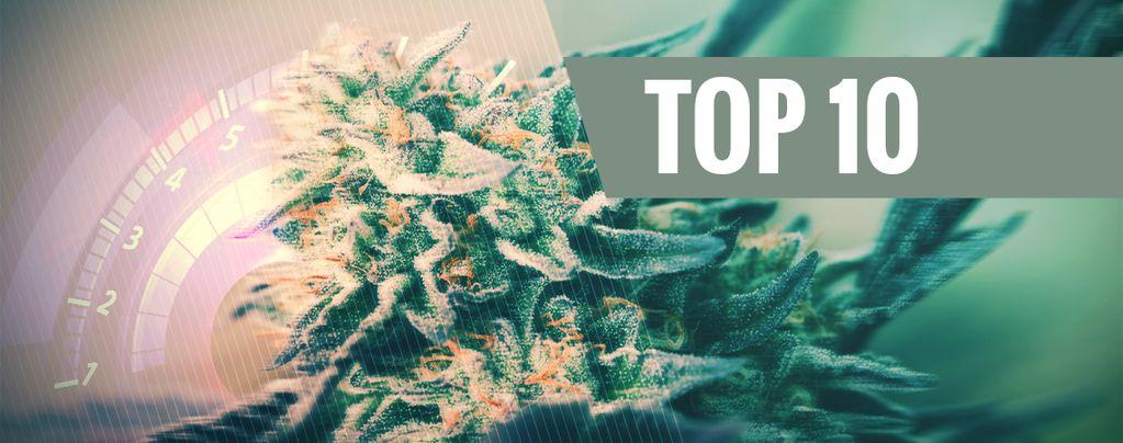 Variétés De Cannabis Les Plus Rapides