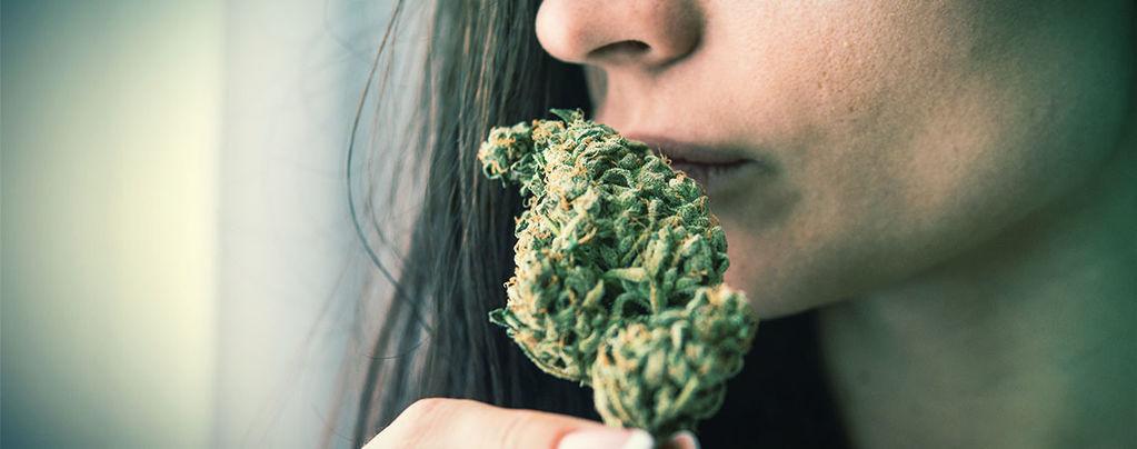 Éliminer L'Odeur Du Cannabis