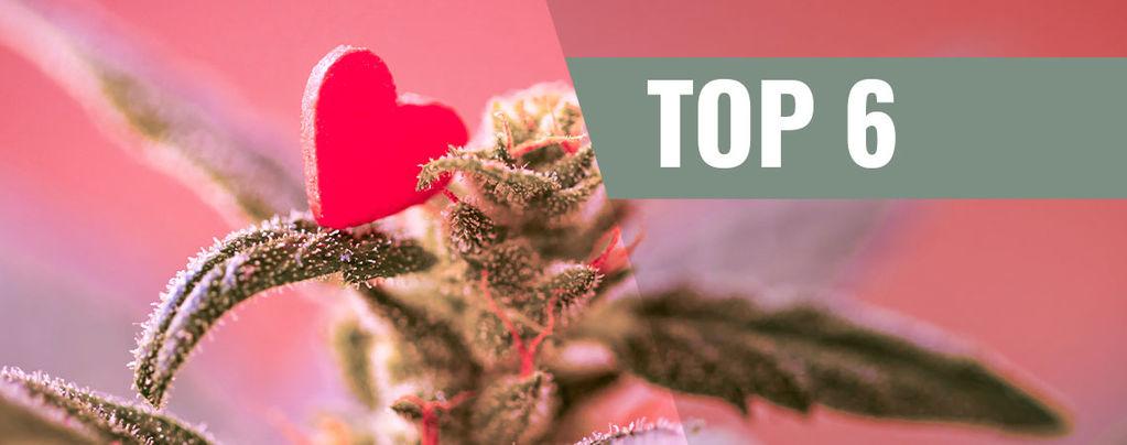 Variétés De Cannabis Pour La Saint-Valentin
