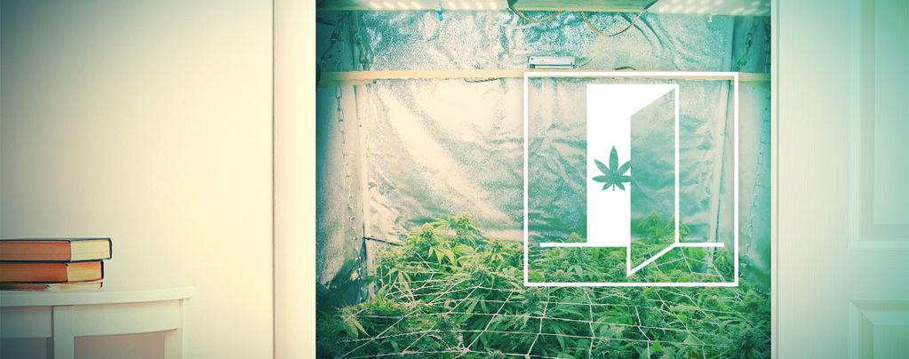 Comment Cultiver Du Cannabis Dans Votre Armoire