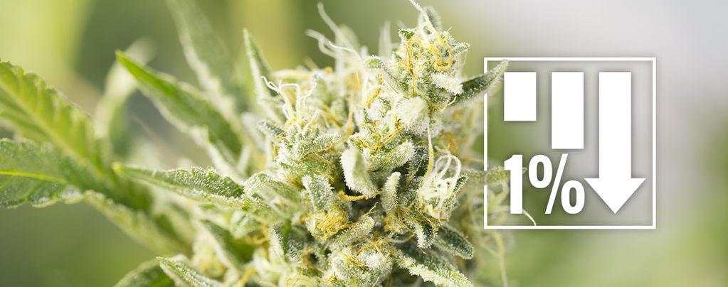 Variétés De Cannabis Sous 1% THC