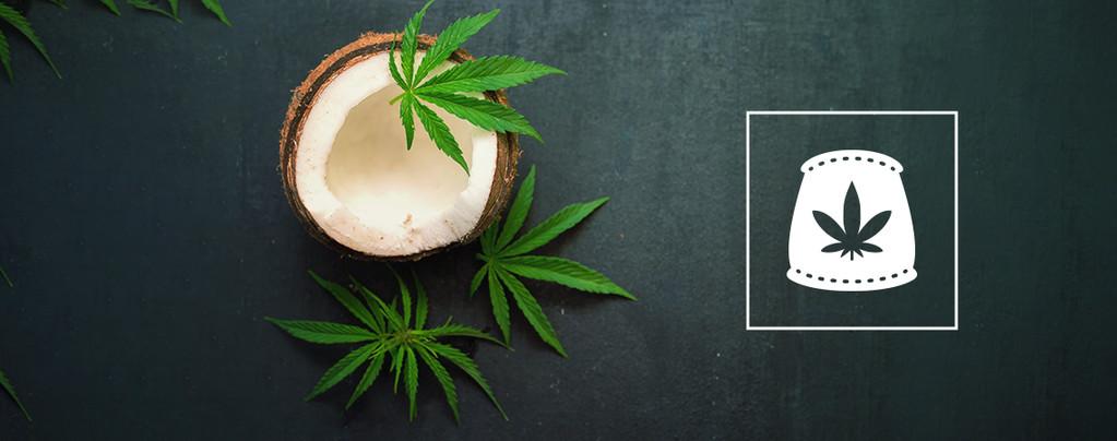 D'Eau De Coco Comme Engrais Biologique Pour Le Cannabis
