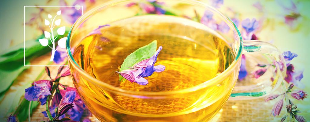 Thé À La Salvia Divinorum