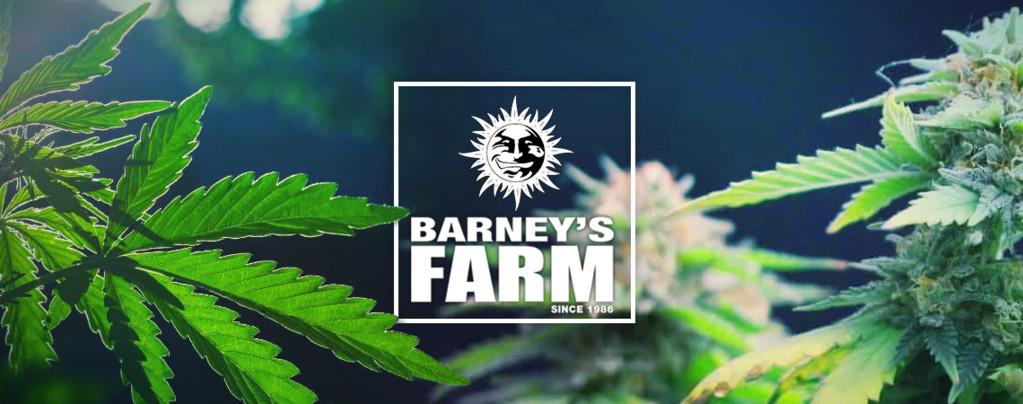 Barney's Farm