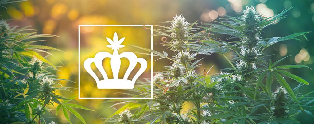 Cannabis Héritage