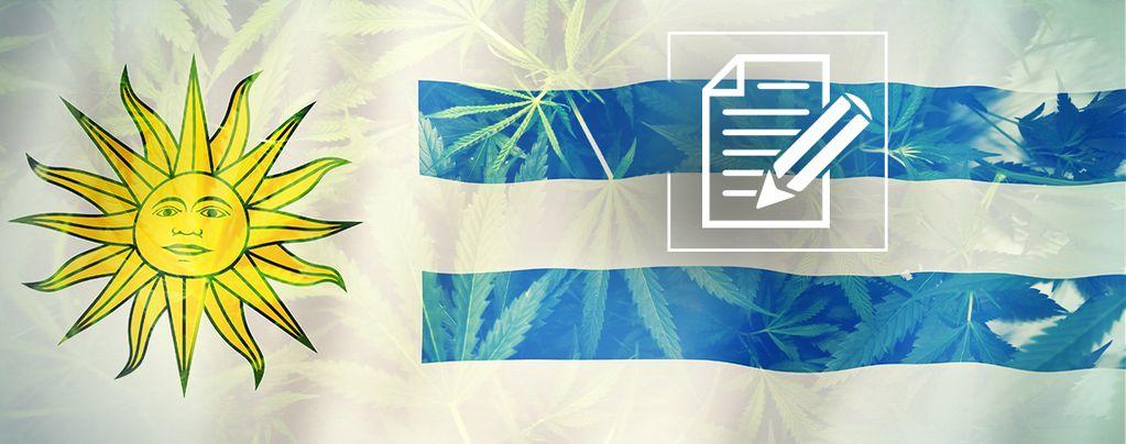 Uruguay : Le Paradis Du Cannabis S'est Transformé En Chaos