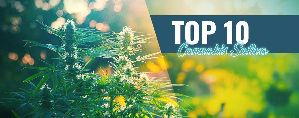 Top 10 Des Meilleures Sativas D'Amsterdam