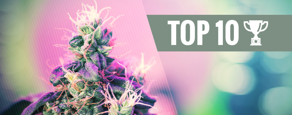 Top 10 Des Variétés De Cannabis Primées