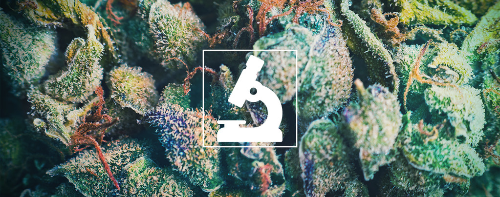 Bienfaits D'Un Microscope Pour Les Cultivateurs Et Consommateurs De Cannabis
