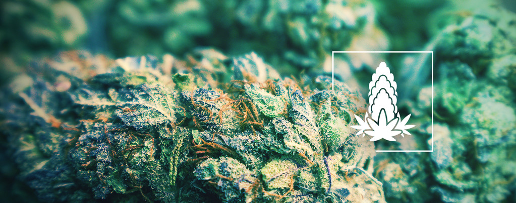 La Densité Des Têtes De Cannabis