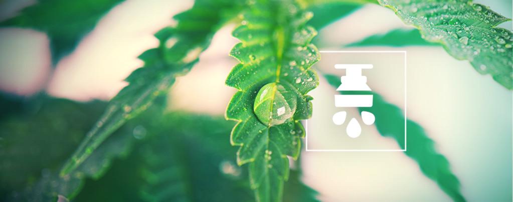 Avantages De L'Utilisation D'Un Système D'Irrigation Pour Le Cannabis