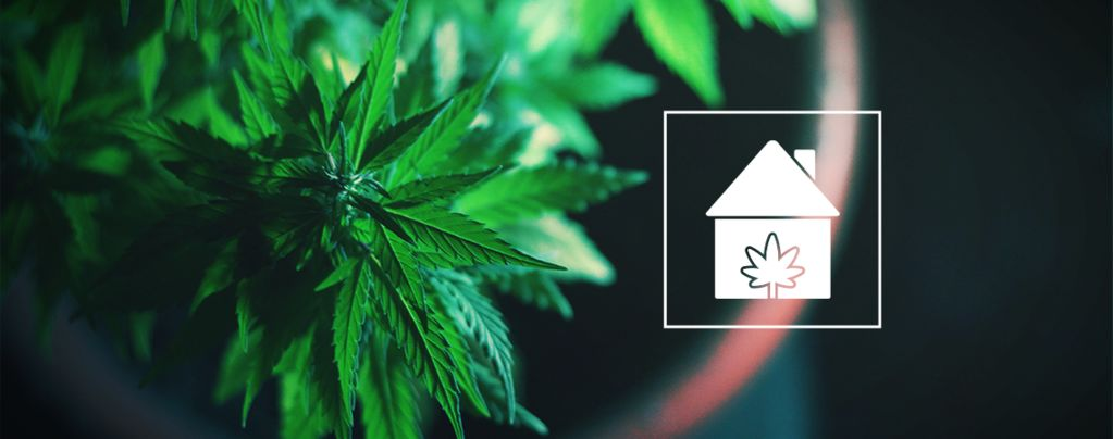 Cultiver Cannabis Endroits Chez Vous