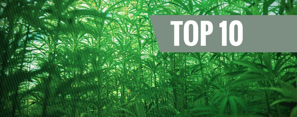 Top 10 Des Plus Grandes Variétés De Cannabis