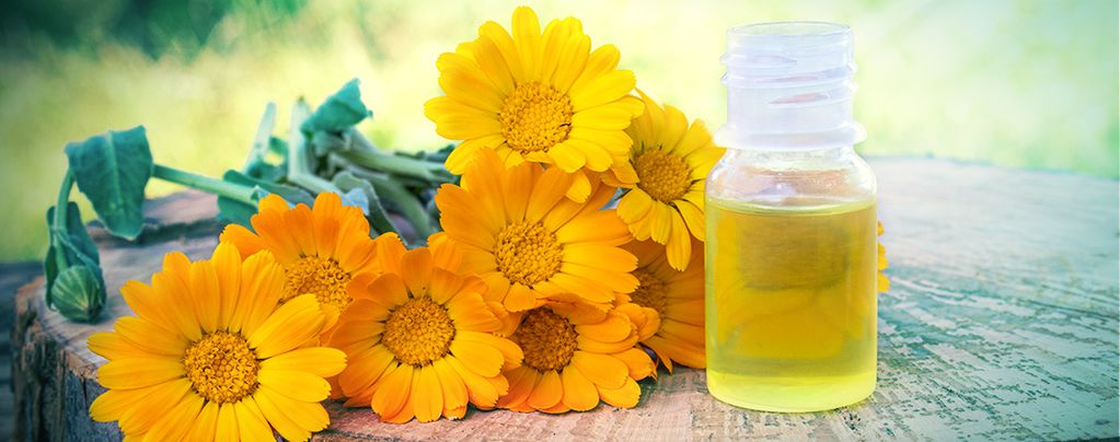 Souci (Calendula officinalis) Buddy Pack