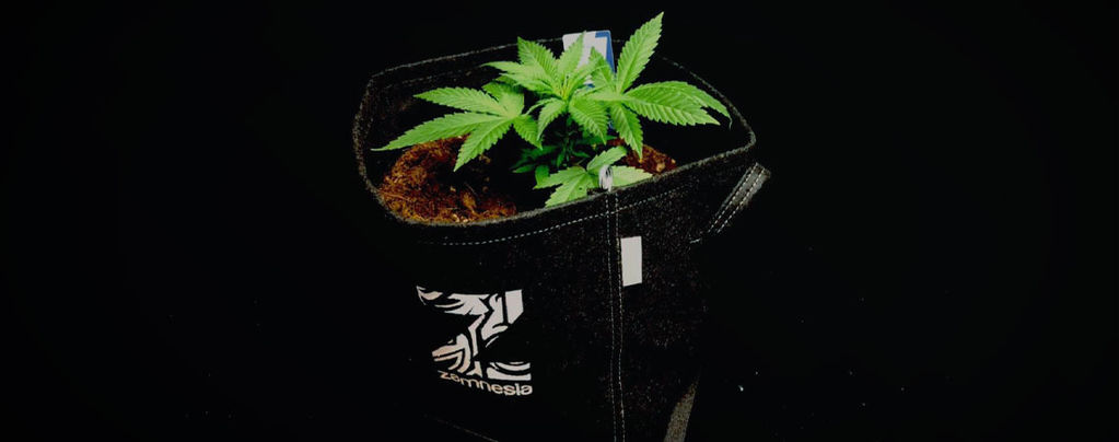 Les Avantages Des Pots En Tissu Pour Cultiver Du Cannabis