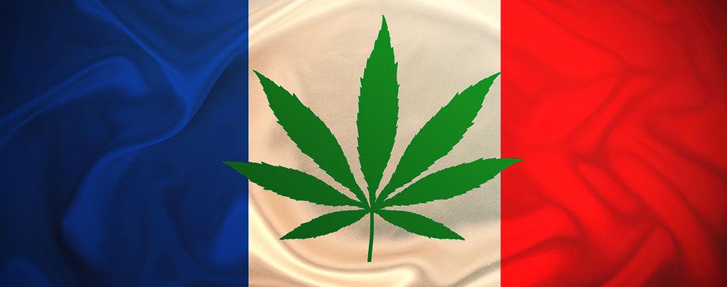 La France Va Offrir Gratuitement Du Cannabis En 2021