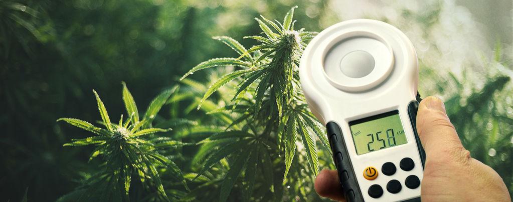 Comment Améliorer Les Rendements De Votre Cannabis À L'aide D'un Luxmètre