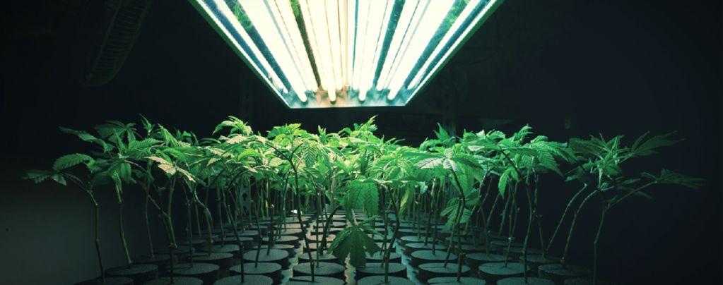 Qu'Est-Ce Qu'Un Substrat Inerte Pour La Culture Du Cannabis