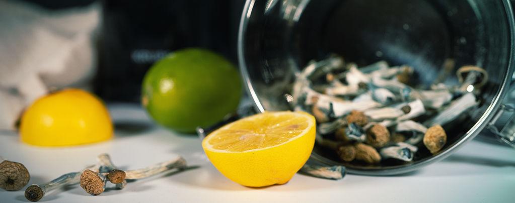 Préparer Un Lemon Tek Pour Un Trip Champi/Truffes Plus Rapide