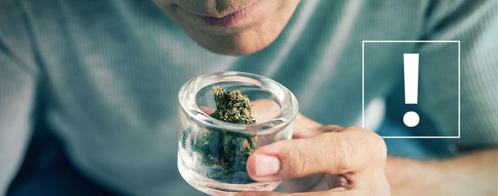 Contaminations Des Têtes De Cannabis
