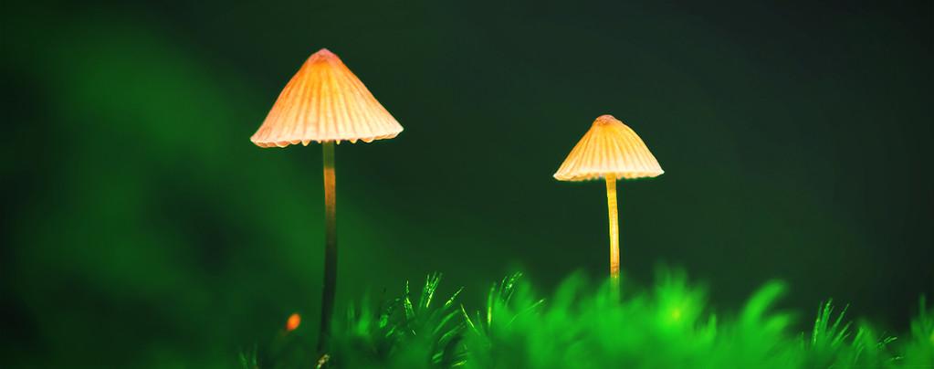 Créer une culture de champignons magiques en extérieur