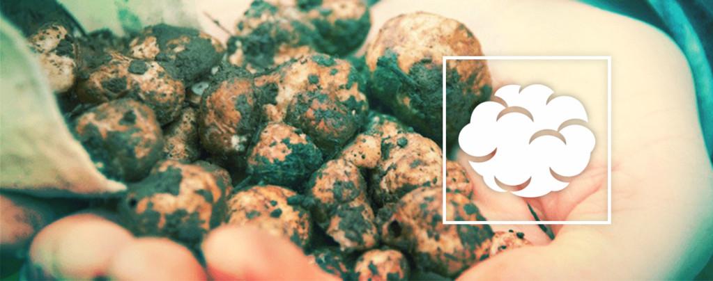 Comment cultiver vos propres truffes magiques