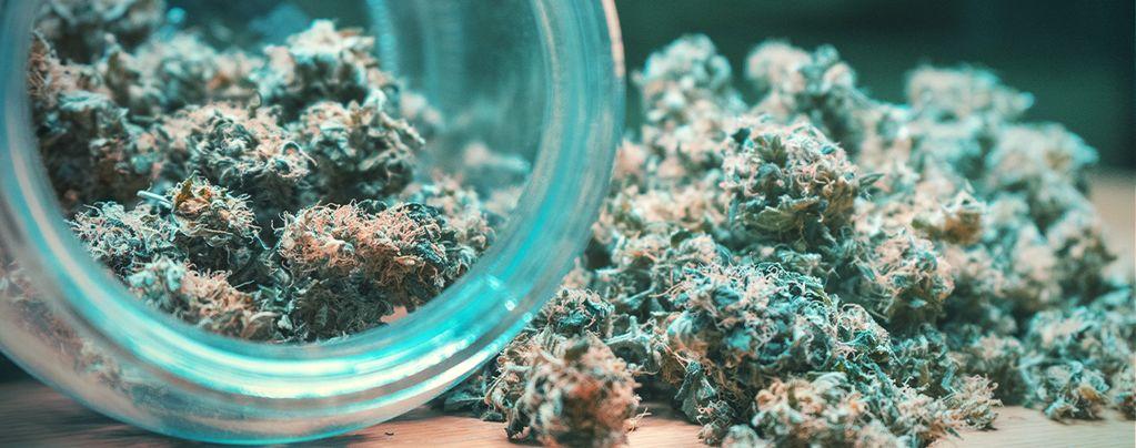 Séchage Et Curing Des Têtes De Cannabis