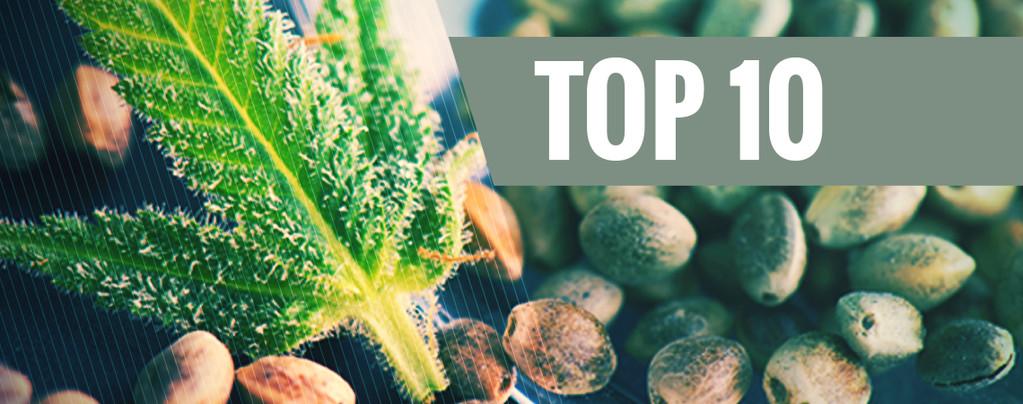 Nos 10 banques de semences les plus populaires