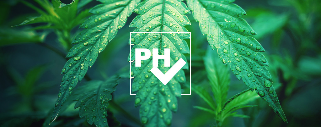 Ajuster Niveau pH Cannabis