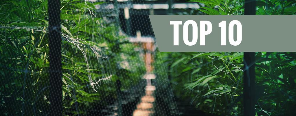 Nos 10 meilleures variétés automatiques d'extérieur