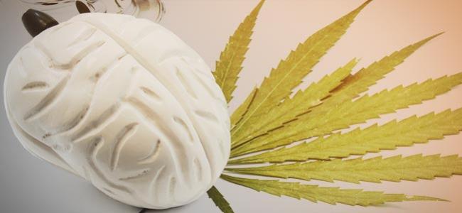Effets Cannabis Cerveau
