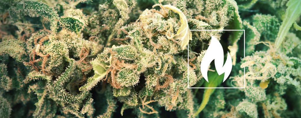 Décarboxyler Cannabis
