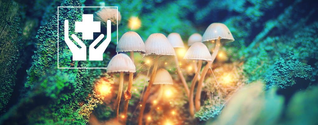 Top 10 Champignons Hallucinogènes