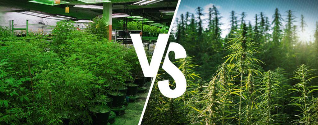 Intérieur ou en Extérieur Cannabis