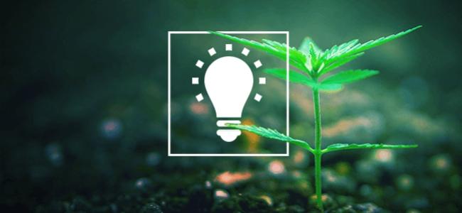 7 Conseils Simples Pour Cultiver Une Meilleure Herbe