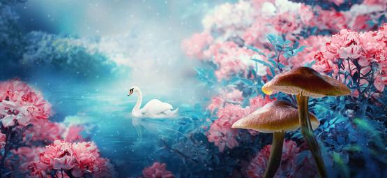 Les Champignons Magiques Provoquent-Ils Un 'Rêve Éveillé' ?