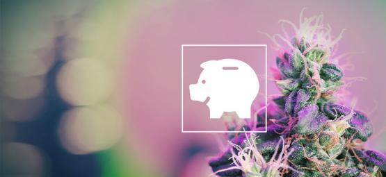 Comment Cultiver Économiquement De La Ganja À L'Intérieur Et Dehors